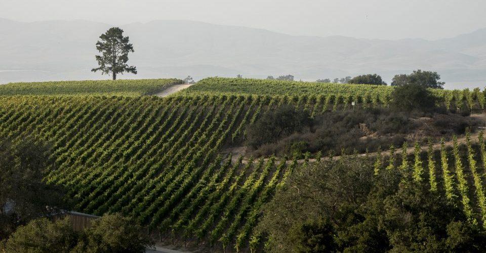 Presqu'ile Vineyard and mountains 2[1]